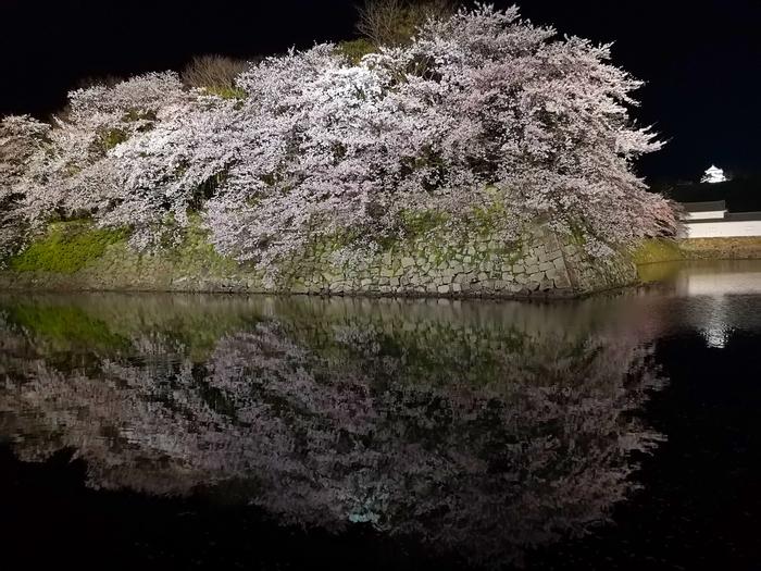 夜桜(その1)