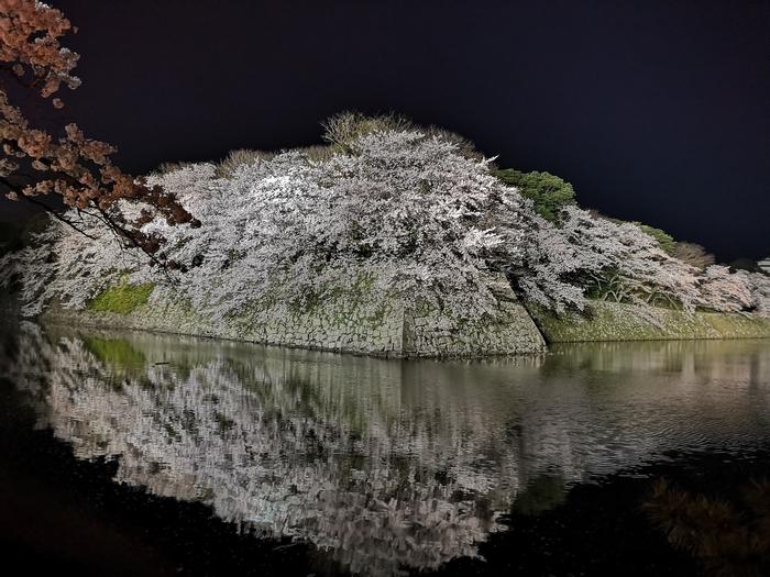 夜桜(その3)