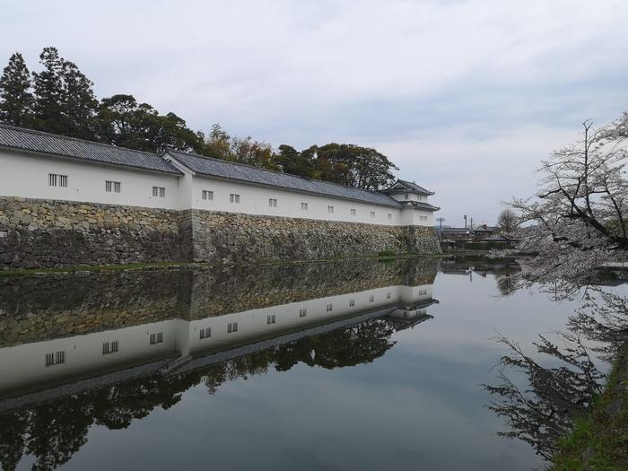 彦根城の桜(その3)