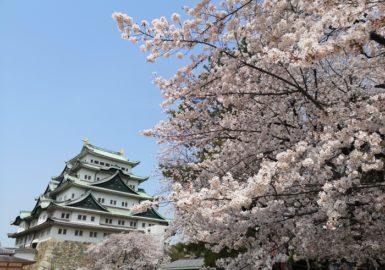 名古屋城と桜(アイキャッチ画像)