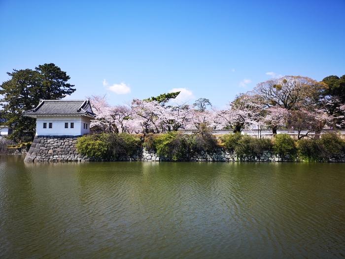 隅櫓と桜(その1)