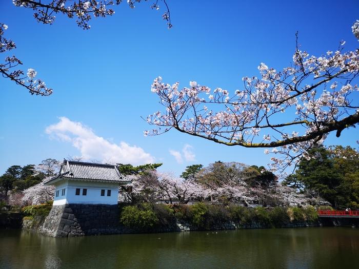隅櫓と桜(その2)