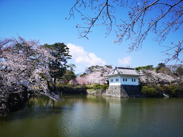隅櫓と桜(その3)