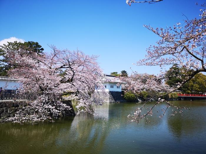 隅櫓と桜(その4)