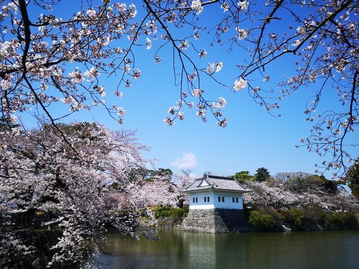 隅櫓と桜(その5)