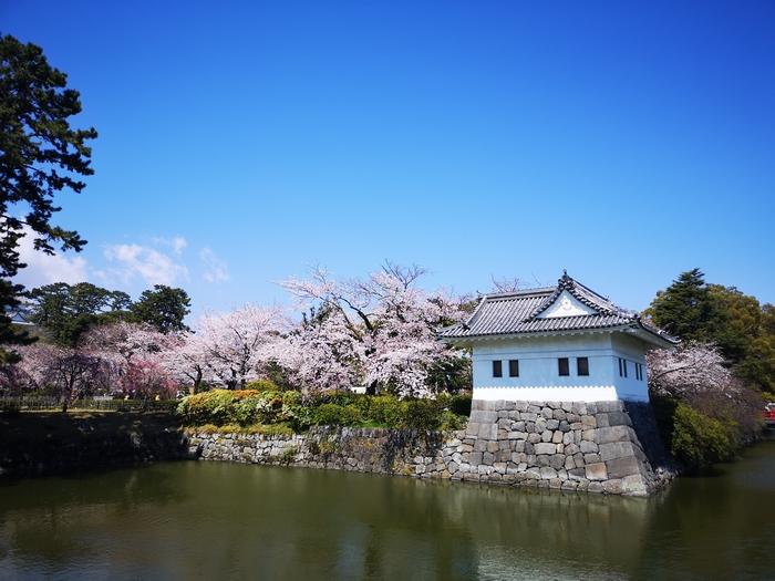 隅櫓と桜(その6)