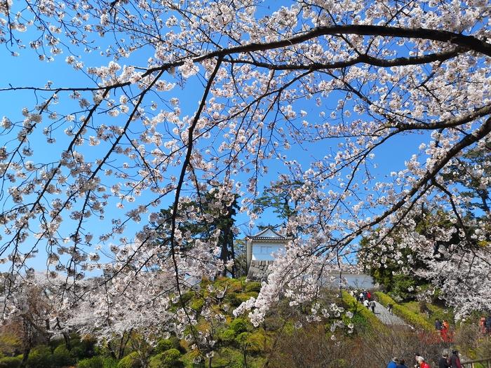 常盤木門と桜(その1)