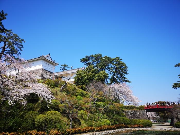 常盤木門と桜(その2)