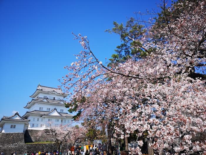 天守閣と桜(その1)