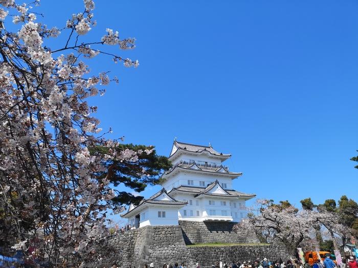 天守閣と桜(その2)