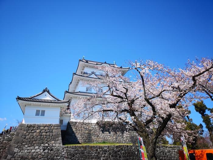 天守閣と桜(その3)