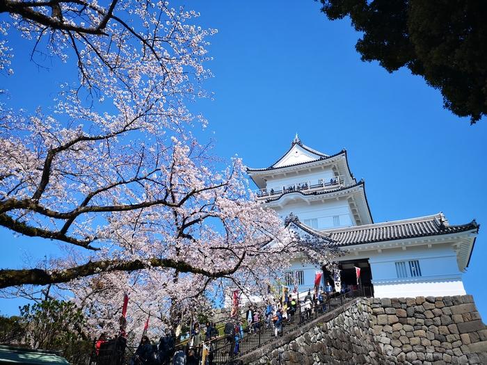 天守閣と桜(その4)
