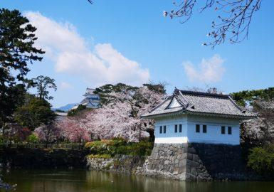 小田原城と桜(アイキャッチ画像)