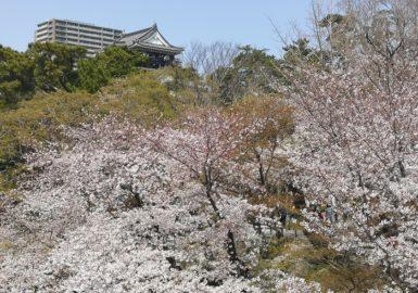 岡崎城と桜(アイキャッチ画像)