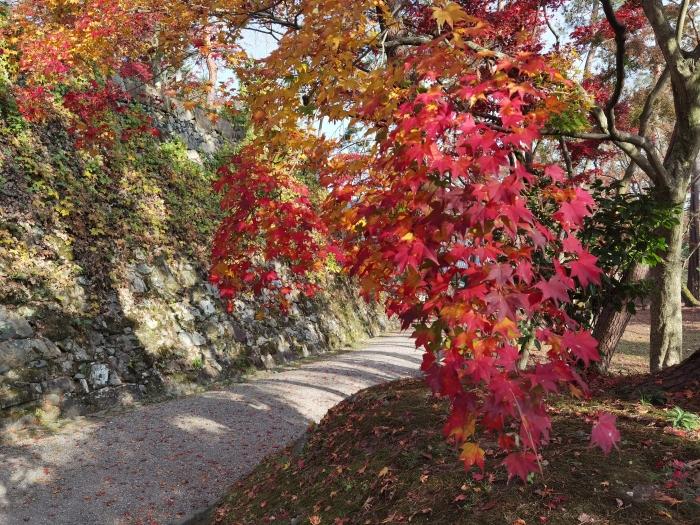 紅葉と天守石垣(2)